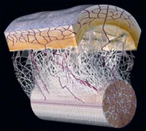 fascia image